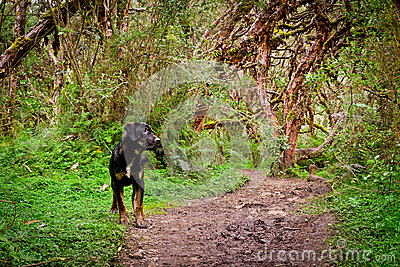 Dog on walk  in the forest