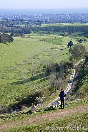 Dog walker and dogs overlook countryside landscape