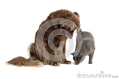 Dog watching cat