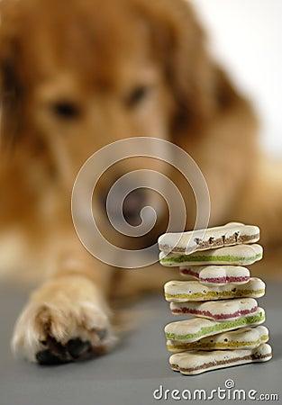 Dog, watching his cookies