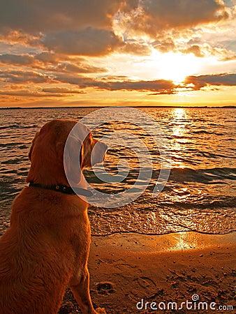 Free Dog Watching Sunset Stock Images - 8392924