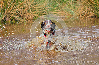 Dog in water with ball