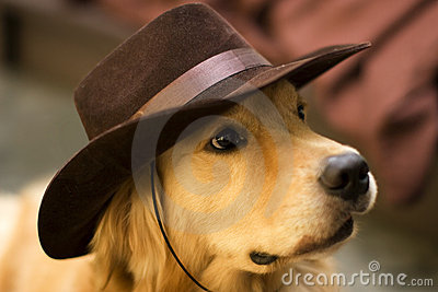 A Dog Wear Cowboy Hat Royalty Free Stock Image Image