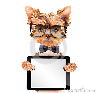 Free Dog Wearing A Neck Bow With Tablet Pc Stock Image - 45484571