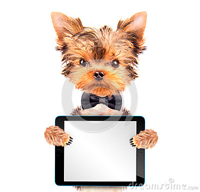 Free Dog Wearing A Neck Bow With Tablet Pc Stock Image - 45484591