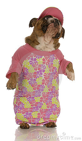 Dog wearing pink dress
