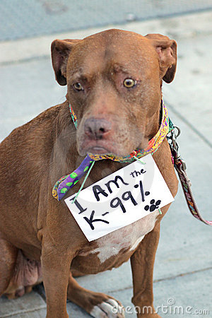 Dog wears sign in protest Editorial Photo
