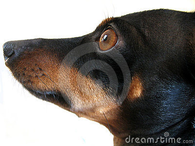 Dog, What a Stock Photo
