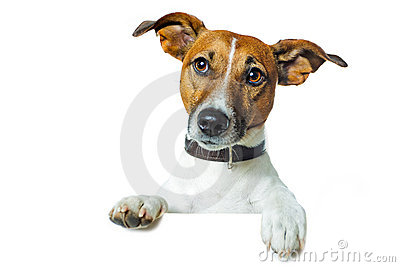 Dog with a white banner