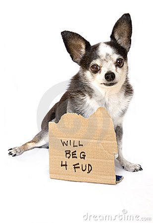 Free Dog Will Beg For Food Royalty Free Stock Photo - 1603085