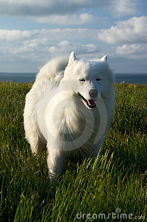 Dog wind