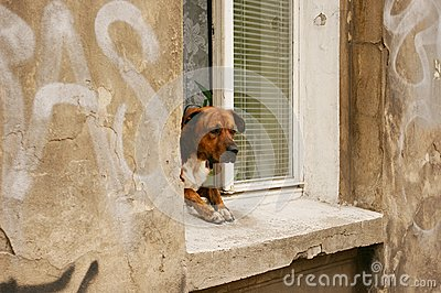 Dog in a window