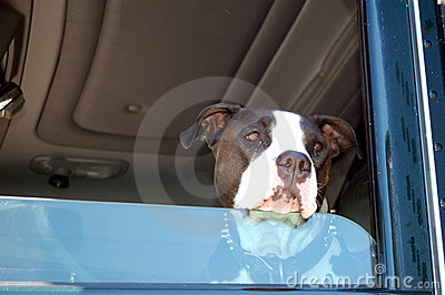 Dog in Window of Truck
