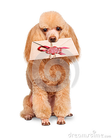 Free Dog With A Letter Royalty Free Stock Images - 38506979