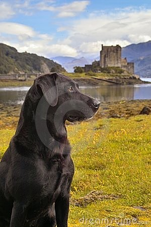 Free Dog With A Scottish Castle Royalty Free Stock Photography - 3582817