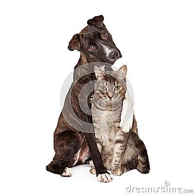Free Dog With Arm Around Cat Stock Photo - 41074950