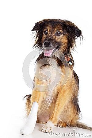 Free Dog With Bandage With Paw Stock Image - 40830511