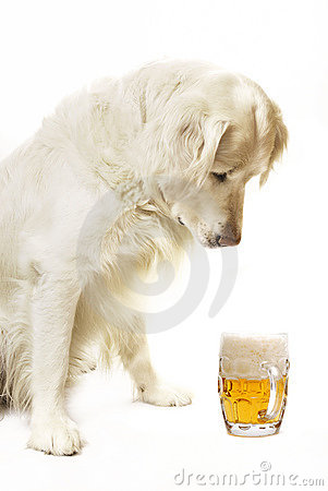 Free Dog With Beer Stock Images - 9336124