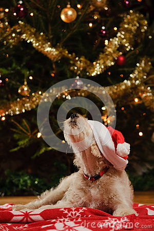 Free Dog With Christmas Hat Royalty Free Stock Images - 28323859