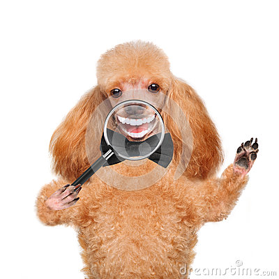 Free Dog With Magnifying Glass. Smile. Royalty Free Stock Image - 48852796