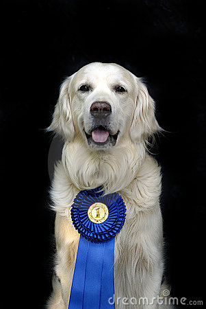 Free Dog With Medal Stock Image - 9916891