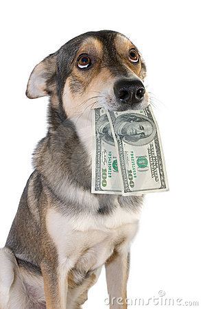 Free Dog With Money Royalty Free Stock Photos - 3589658
