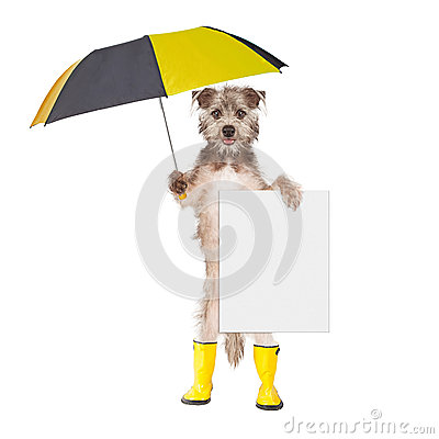 Free Dog With Rain Umbrella And Sign Stock Photography - 55474982