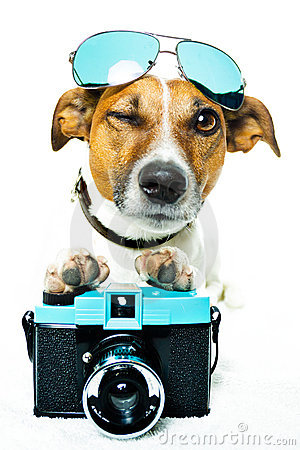 Free Dog With Shades And A Photo Camera Royalty Free Stock Photo - 23266915