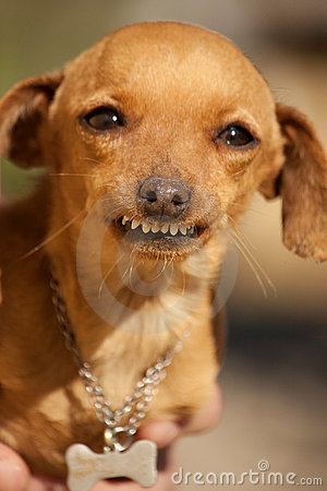 Free Dog With Weird Smile Stock Photography - 18729892