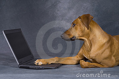 Dog surfing the network