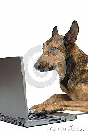 Dog working on laptop