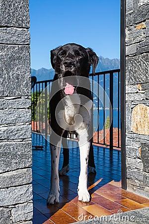 Free Dog Yawning Stock Images - 43668534