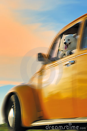 Dog On A Yellow Car