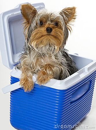 Free Doggie In The Cooler Stock Photography - 17242622