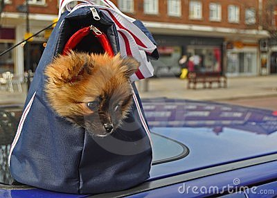 Doggy in a bag