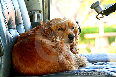 doggy in the driver s seat