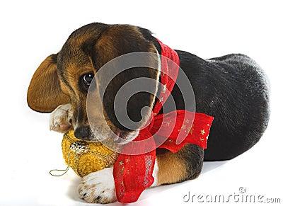 Doggy fun with Christmas