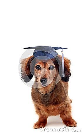 Doggy graduation
