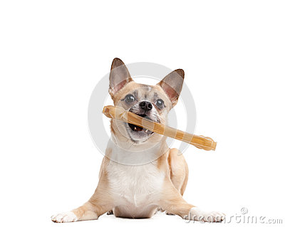 Doggy keeps bone in the teeth