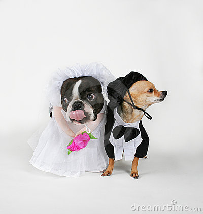 Free Doggy Marriage Stock Photography - 1883592