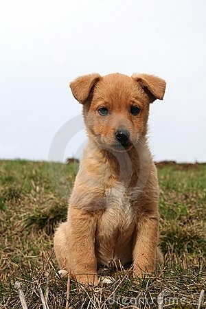 A doggy puppie