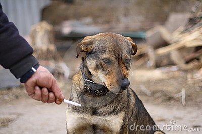 Dogs against smoking (for a healthy way of life)