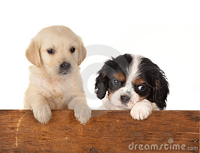 Dogs at a fence