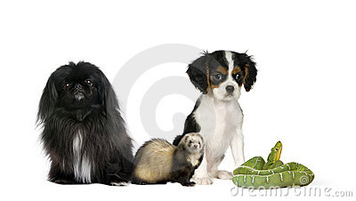 Dogs, ferret, and green snake in front background