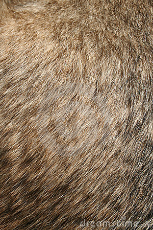Dogs Fur