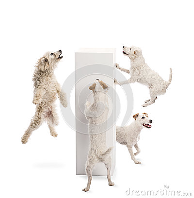 Dogs jumping and looking at pedestal
