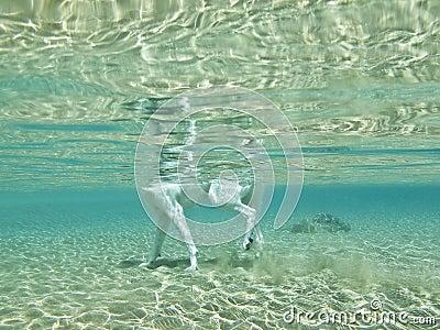 Dog's legs underwater,