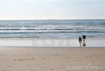 Dogs running on beach