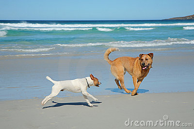 Dogs running on a beach