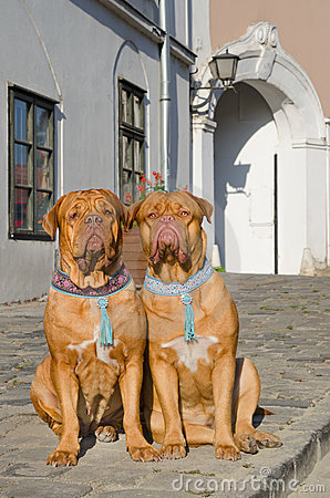 Dogs on a sidewalk